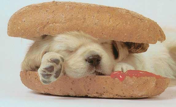 L'humeur du jour... - Page 29 Hotdog